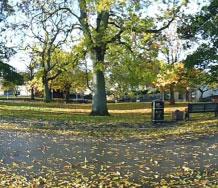tree falling leaves path bin bench