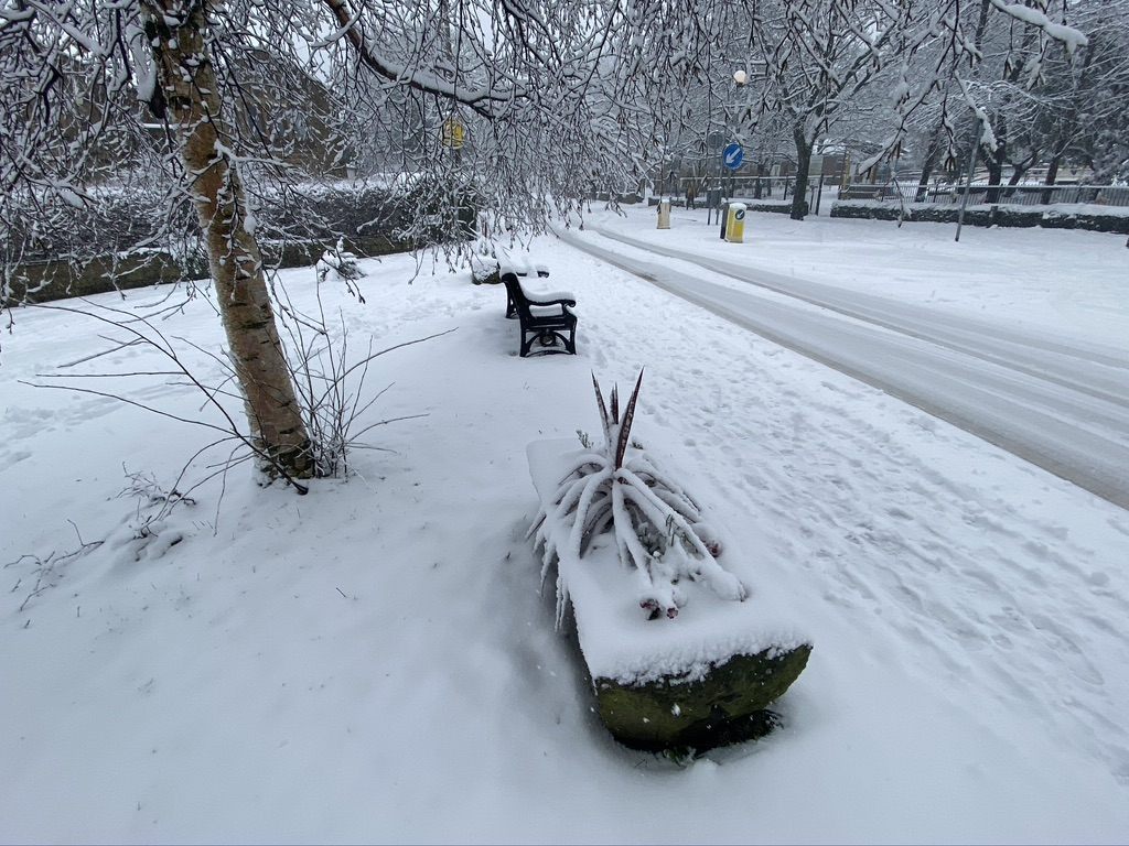 Planters with a cordyline plant in covered in snow