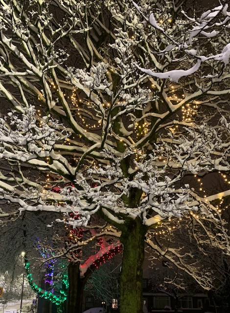 Tree covered in snow at night